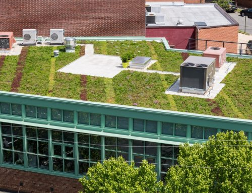 The Growing Trend of Green Roofs